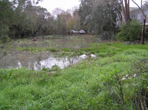 Wetland flooded