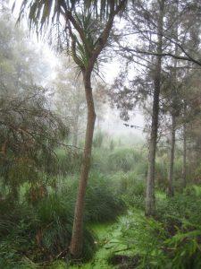 IMG_6180 c wetland fog